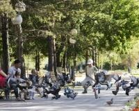 Голуби в городском парке