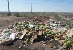 Новый закон об экологии спасет города от захламления мусором