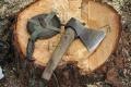 Павлодарские егеря минувшей ночью поймали трех лесокрадов