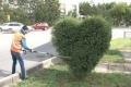 Зеленые сердца появились на улицах Павлодара