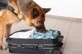Служебно-розыскная собака нашла наркотики, спрятанные в носке
