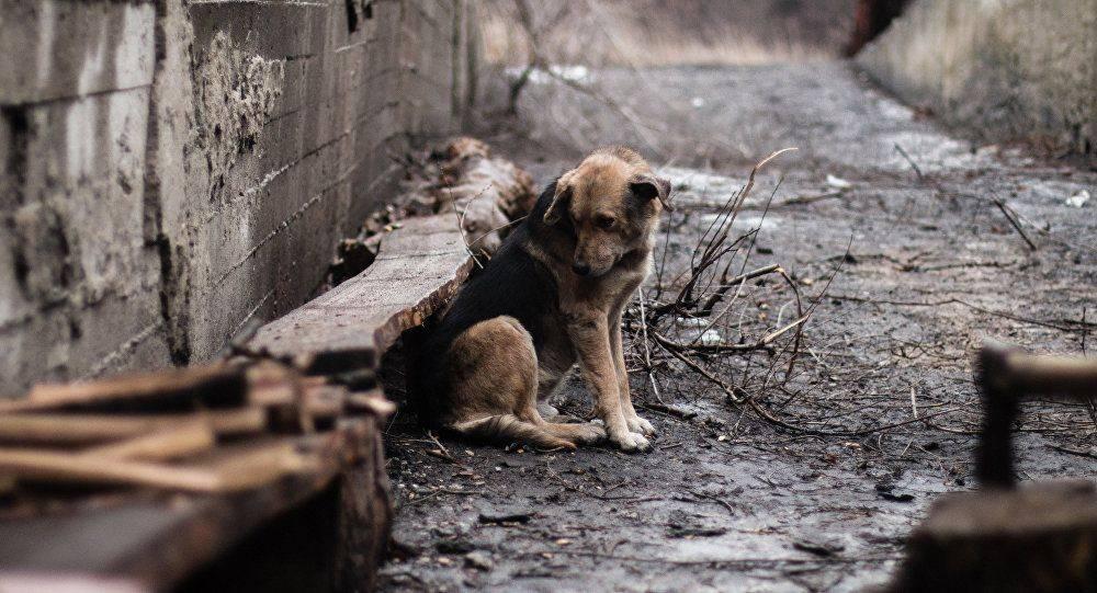 Павлодарские полицейские подключились к розыску живодеров, которые жестоко убили собаку