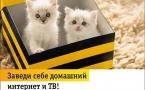 Beeline Казахстан запустил услугу переезда домашнего интернета и BeeTV