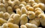 О строящемся птицекомплексе рассказали в Жетекши
