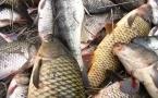 Прокуроры взывают к совести браконьеров через СМИ