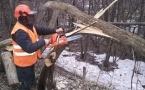 Павлодарцы негодуют: на набережной вырубают многолетние деревья