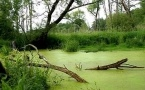 Лесники спасли увязшую в болоте девушку
