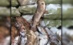 2,5 тонны запретного улова задержали павлодарские полицейские