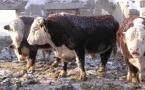 Почему фермеры Павлодара уже не рассчитывают на субсидии?