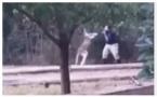 В США кенгуру избил работника зоопарка