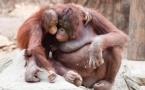 Какой зоопарк настолько хорош, что в нем можно жить? Кхао Кхео, Таиланд