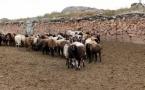 В Павлодарской области крестьянам раздали свыше 6000 овец