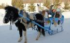 В Павлодаре накануне Года лошади пятиклассница приготовила для пони особое лакомство