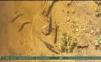 Странное поведение рыбы в Иртыше зафиксировали очевидцы