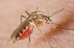 В Павлодарской области начали травить комаров
