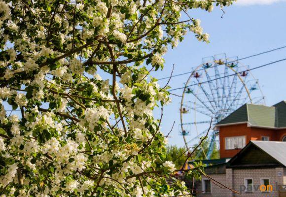 Цветущий Павлодар (фото)
