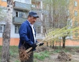 Сделай хорошее дело - посади дерево