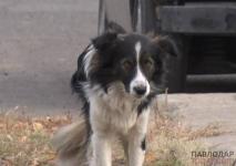 Павлодарский приют для животных переполнен
