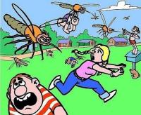 В отделе ЖКХ рассказали, что будут делать с комарами