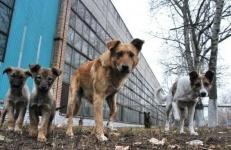 В Павлодаре с начала года уничтожили больше 5,5 тысяч бродячих животных