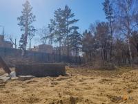 Павлодарские полицейские приостановили вырубку деревьев в сквере Денсаулык