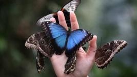 Выставка тропических бабочек пройдет в Павлодаре