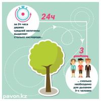 Инфографика: роль деревьев в экологии города