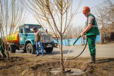 Булат Бакауов выразил претензию по поводу плохой приживаемости растений в областном центре