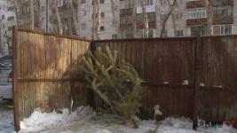 Варварским назвали биологи способ утилизации новогодних елок в Павлодаре