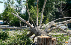 В Павлодаре с прошлого года у четырех компаний сохраняется долг перед городом в части компенсационной посадки деревьев