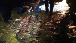 Рыбы на девять миллионов тенге наловили два браконьера в Павлодарской области