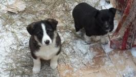Бездомных кошек и собак будут свозить в село Павлодарское