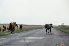 Две аварии подряд на одном и том же участке трассы произошли в Павлодарской области