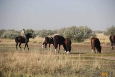 Фермерам Павлодарской области не хватает пастбищ