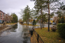 Павлодарские биологи просят провести качественную инвентаризацию деревьев
