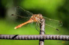 В отделе ЖКХ рассказали, кто будет бороться с комарами и мошками в Павлодаре