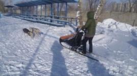 Гонки на ездовых собаках прошли в Павлодаре