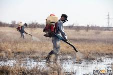 В Павлодаре приступили к уничтожению личинок комаров в водоемах
