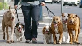 Единые правила выгула собак и кошек потребовал разработать депутат