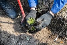 Аким Павлодарской области предлагает регулярно проверять, как приживаются десятки тысяч высаженных деревьев