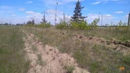 """""""Это печальная ситуация"""": павлодарские экологи посетили места компенсационной посадки деревьев"""