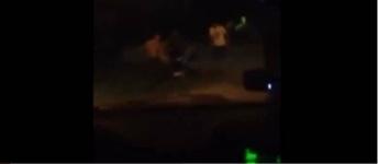 Павлодарцы возмущены циничными комментариями людей, снимающих драку на видео