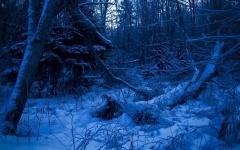 После кражи мужчина найден мертвым в лесу в Павлодарской области