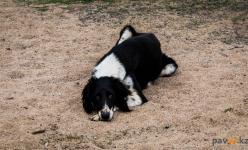 Павлодарка обратилась в полицию, увидев нарушение правил выгула животных