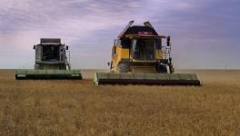 Рекордный урожай - более миллиона тонн зерновых - ожидают собрать нынешней осенью в Павлодарской области