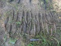 Павлодарские полицейские задержали браконьеров
