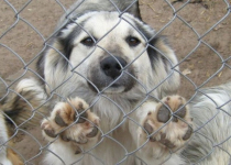 Все, кому небезразлична судьба животных и строительство приюта для животных в г.Павлодаре