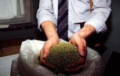 Свыше 120 килограммов марихуаны изъяли полицейские у жителя Павлодара