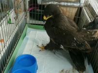 Краснокнижную птицу спасли павлодарские волонтеры