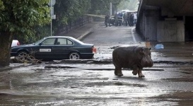 Большинство сбежавших во время наводнения из зоопарка в Тбилиси животных найдены